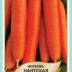 морква Нантська