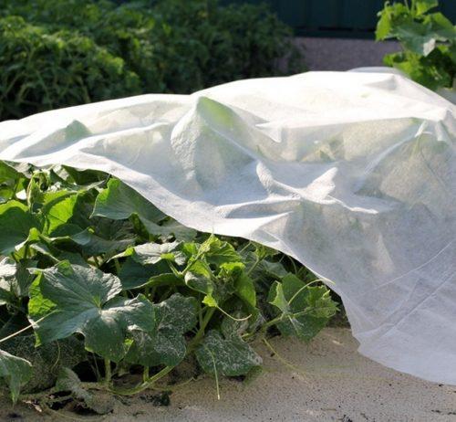 Агроволокно для укривання рослин