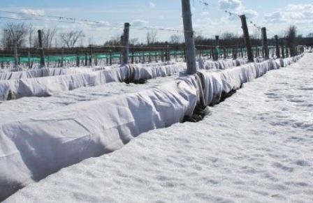 укриття виноградників агроволокном