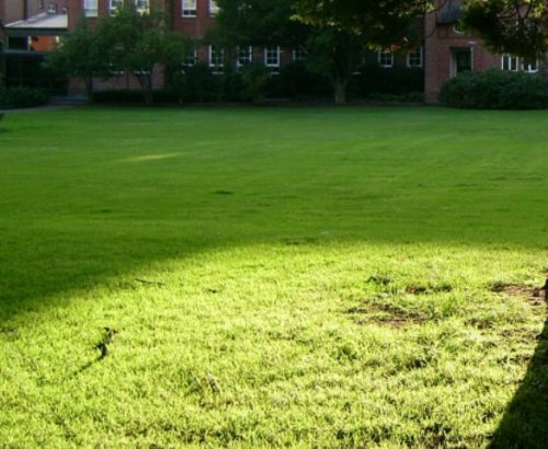 газон на подвір'ї