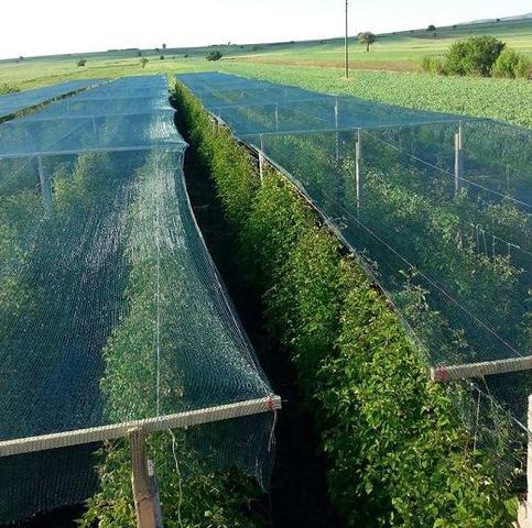 затіняюча сітка на овочевих культурах